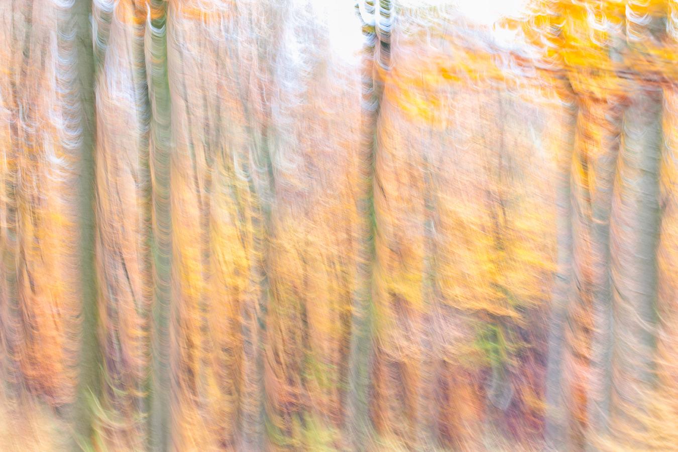 Autumn Forest II (2014)
