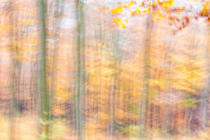 Autumn Forest I (2014) thumbnail