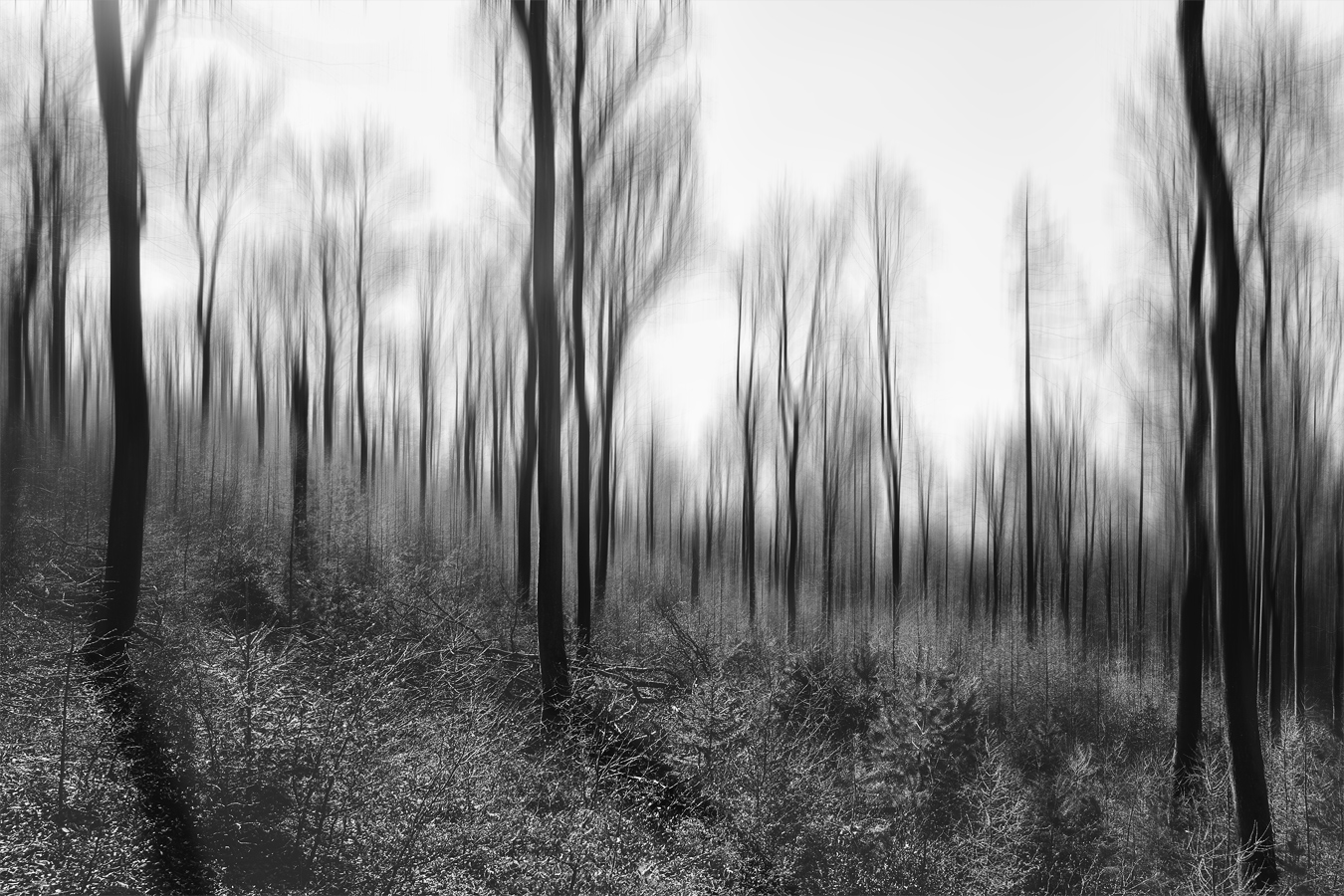 Spessart Forest (2020)