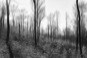 Spessart Forest (2020) thumbnail